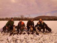 Lov fazanske divljaci